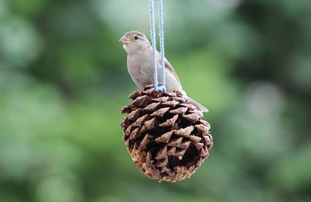 Pinecone Bird Feeders | Pure Flix