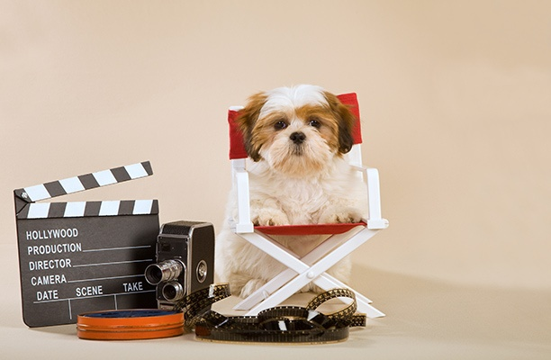 Animals on Set: Man's Best Friend in Family Movies